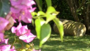 Bodas-Barcelona-jardin-28
