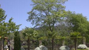 Bodas-Barcelona-jardin-47